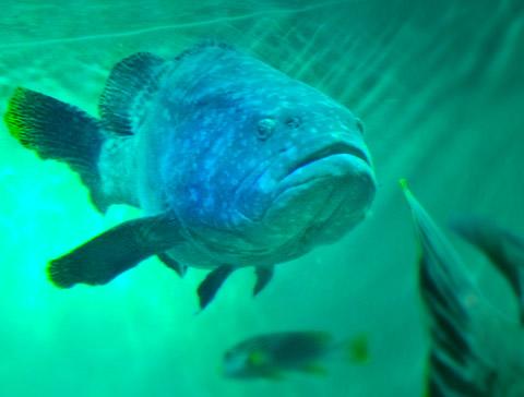 Aqua12